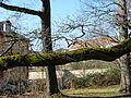 Schlosspark-Kirchheimbolanden-01.JPG
