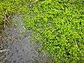 Semi-flooded plants.jpg
