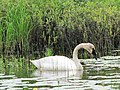 Seney National Wildlife Refuge (5849480618).jpg