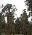 Sequoya National forest Giant Forest en2016 (35).JPG