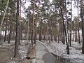 Seversk, Tomsk Oblast, Russia - panoramio (58).jpg