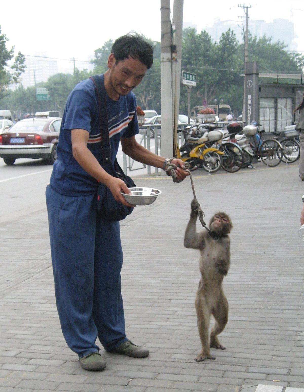 Derechos De Los Animales Wikipedia La Enciclopedia Libre