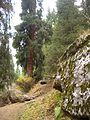 Shymbulak Valley - CIMG8517.JPG