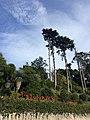 Sintra-Cascais (30968576514).jpg