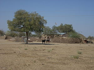 Dhani (settlement type)