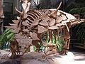 Skelett von Gastonia.JPG