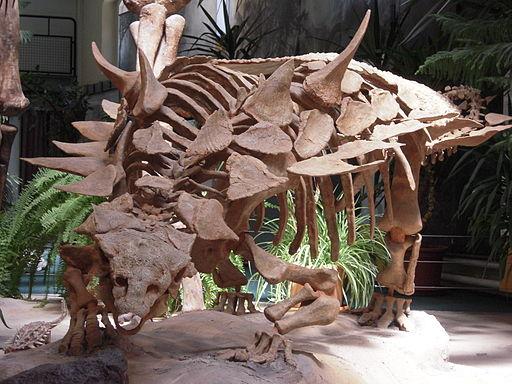 Skelett von Gastonia