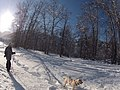 Skijoring near Blackbird Island Leavenworth Washington.jpg