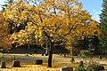 Sleepy Hollow Cemetery, Concord MA.jpg