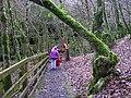 Sloughan Glen - geograph.org.uk - 1176756.jpg