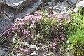 Small tortoiseshell (Gru) (37849314502).jpg