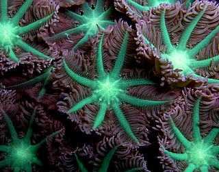 Deep-water coral