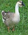 Some Goose.jpg