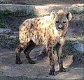 wiki list mammals displaying homosexual behavior