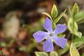 Spring in Epsom (6980151560).jpg
