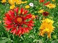 Spring in Iran-Qom City (41).jpg