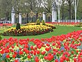 Spring on the Mall - geograph.org.uk - 783916.jpg