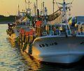 Squid fishing boats moored at Hakodate Bay (7662429646).jpg