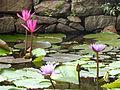 Sri Lanka Photo099.jpg