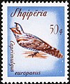 Stamp of Albania - 1965 - Colnect 197247 - European Nightjar Caprimulgus europaeus.jpeg