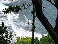Starr-090623-1594-Terminalia catappa-habitat view swimmer in ocean-Waianapanapa-Maui (24940629926).jpg