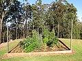 Starr-110822-8241-Cucurbita pepo-habitat view vegetable garden-Hawea Pl Olinda-Maui (25077045226).jpg