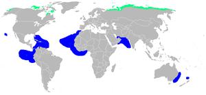Pomarine jaeger - Image: Stercorarius pomarinus area