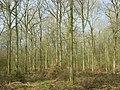 Stibbs Wood, Radley - geograph.org.uk - 1231144.jpg