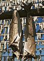 Stockfish LC0149.jpg
