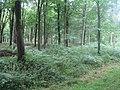 Stockton Wood near Stockton 3 - geograph.org.uk - 924242.jpg