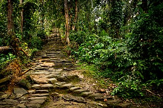 Ciudad Perdida - This is a section of the stone staircase that leads up from the river valley to Ciudad Perdida.