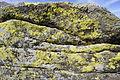 Stone run yellow lichen.JPG