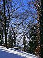 Strange Trees - panoramio.jpg