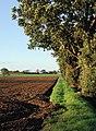 Summer Hill, Burstwick - geograph.org.uk - 264536.jpg