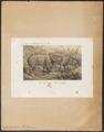 Sus barbatus - 1700-1880 - Print - Iconographia Zoologica - Special Collections University of Amsterdam - UBA01 IZ21900072.tif