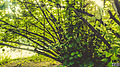 Svln svln4821 ordubad me best top photography resimleri sekilleri photos creative profil maraqli sekil resim fotograflari fotograf ornek resimler (350).JPG