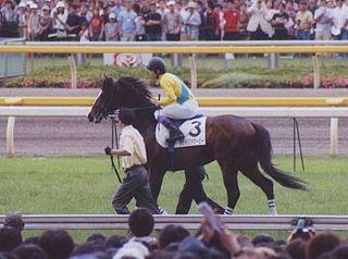 Tanino Gimlet Japanese-bred Thoroughbred racehorse