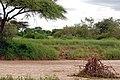 Tarangire 2012 05 27 2027 (7468496250).jpg