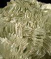 Tarbuttite-mun08-11b.jpg