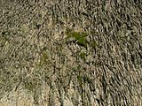Outside Layer Of Moss And Lichen Growing On Thatch.