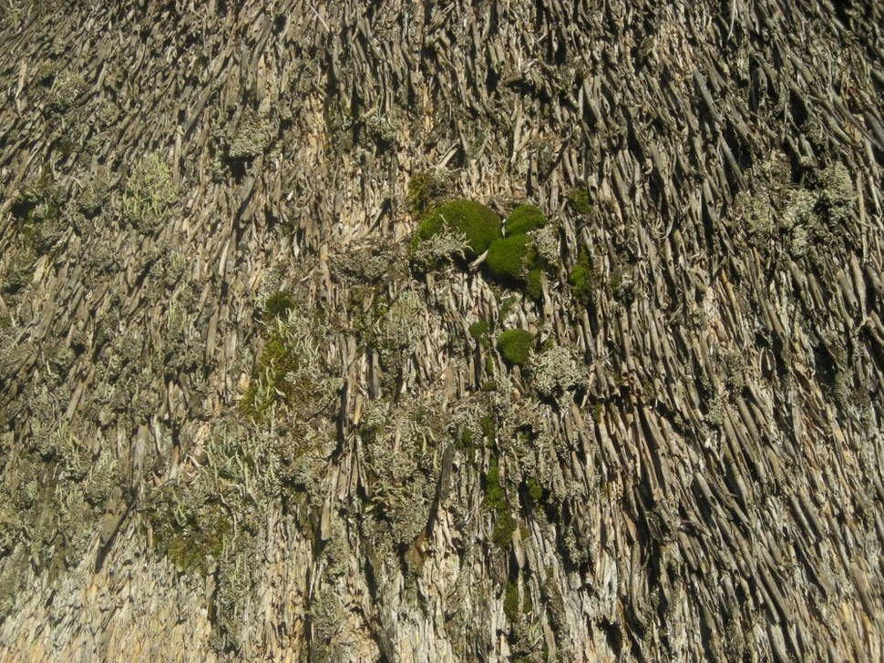 Thatched Roof Moss