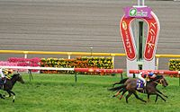 2009年優駿牝馬