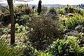 The Dry Garden at RHS Garden Hyde Hall, Essex, England.jpg