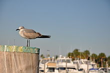 The Second Bird in Miami, Fl.JPG