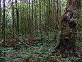 The Ur Wald, Knighton Wood, Woodford Green.jpg