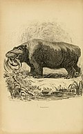 The animal kingdom - arranged after its organization, forming a natural history of animals, and an introduction to comparative anatomy (1849) (14756101276).jpg