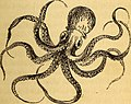The common objects of the sea shore - including hints for an aquarium (1859) (20047565733).jpg