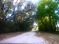 The old Spanish mission trail - panoramio.jpg