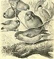 The royal natural history (1893) (14761809716).jpg