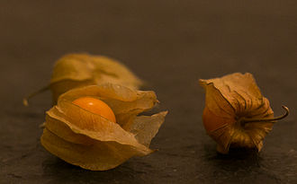 Physalis - Physalis sp. fruit with husk